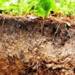 Лесоводство о скорости почвообразования